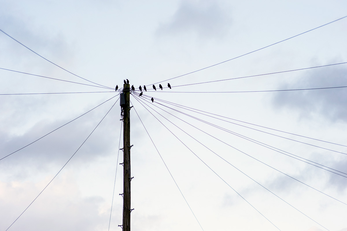 Birds on a telegraph pole