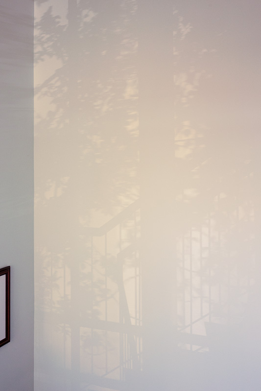The shadow of a banister rail and tree on a stairwell wall