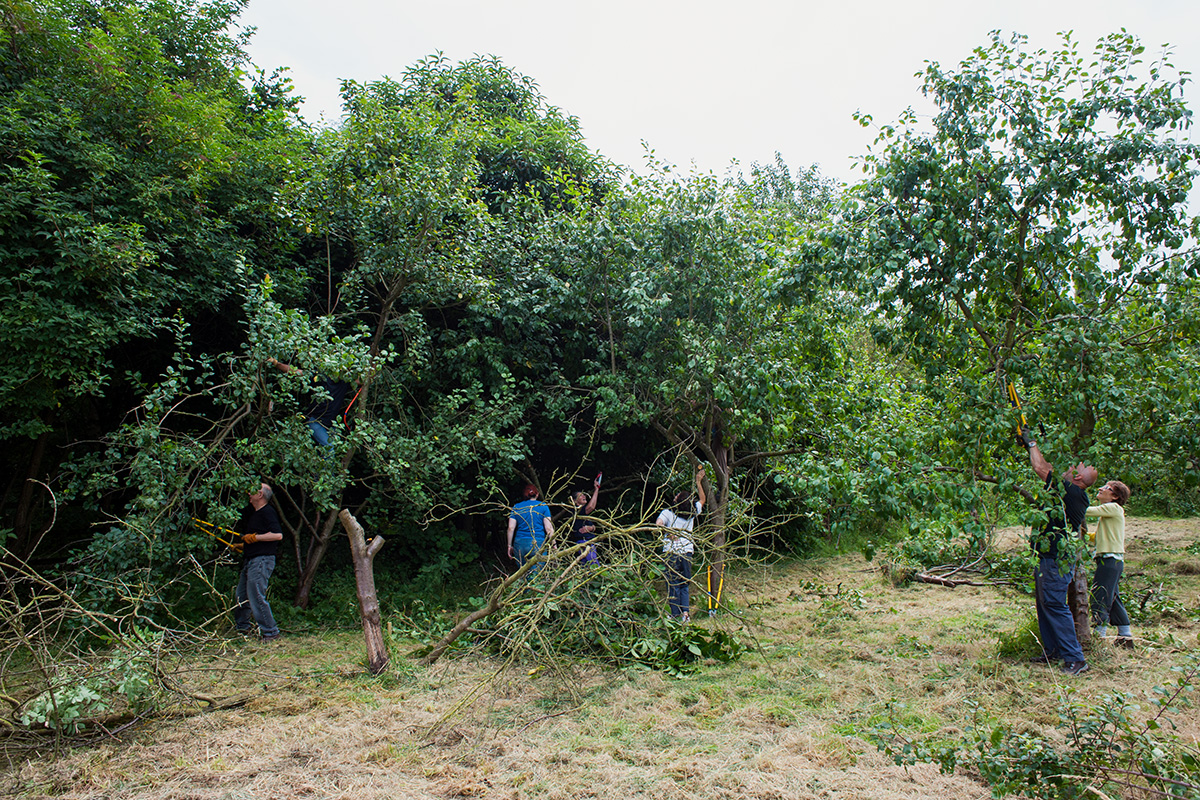 Volunteers being taught how to prune stoned-fruit trees at Kenworthy Orchard, a community orchard near Chorlton Water Park.