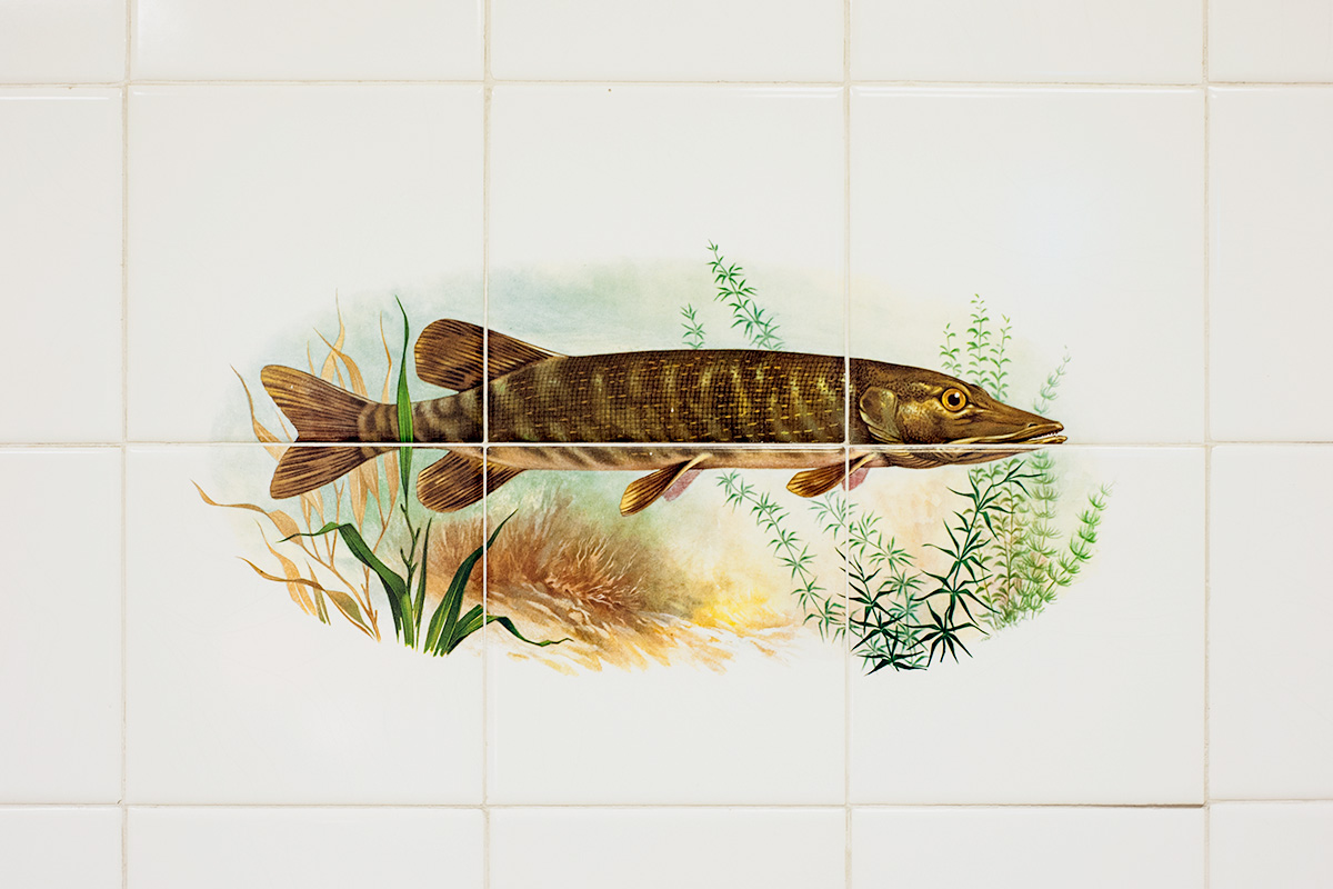 Tiles printed with fish in a Chinese takeaway in Rusholme, Manchester