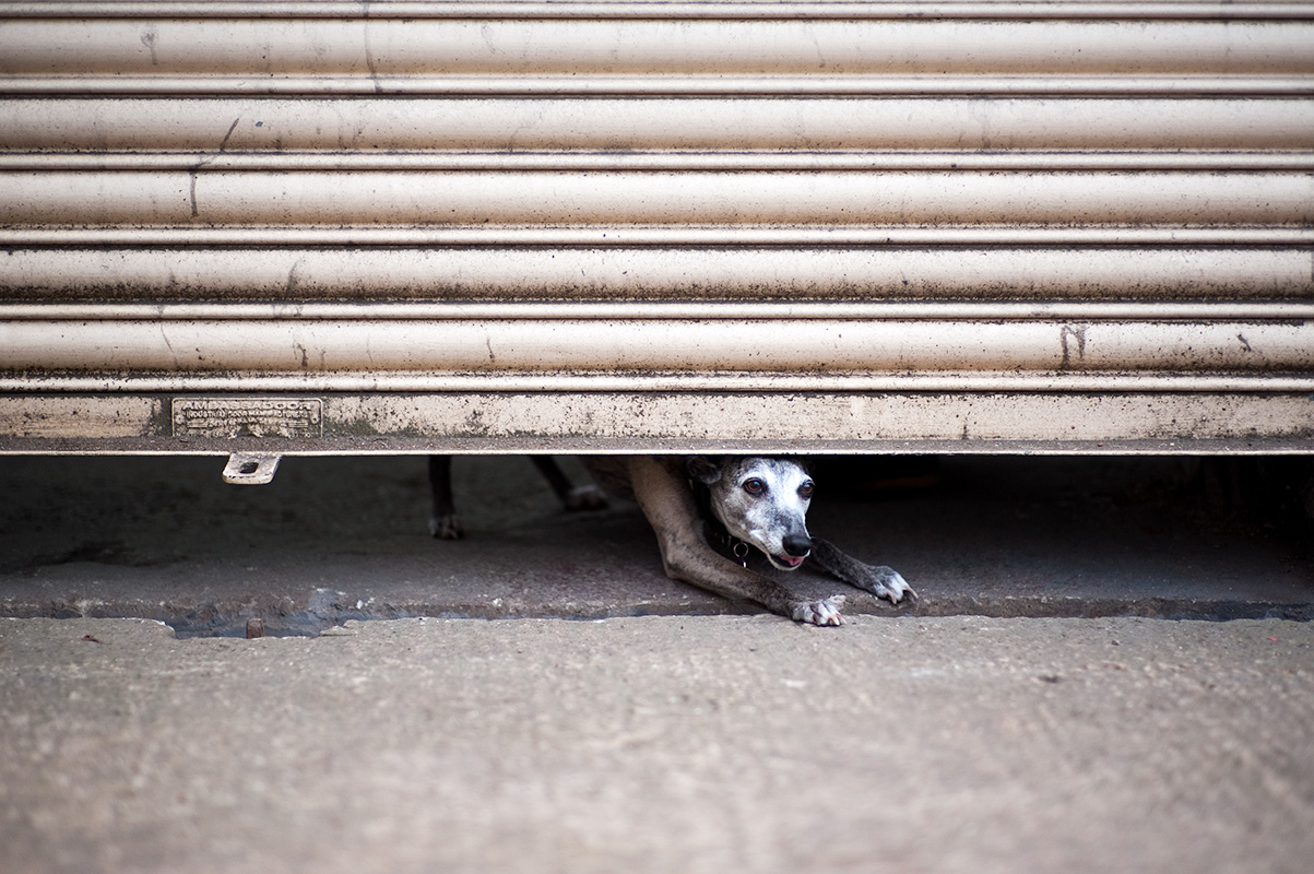 A whippet squeezing under a roller shutter at an industrial unit