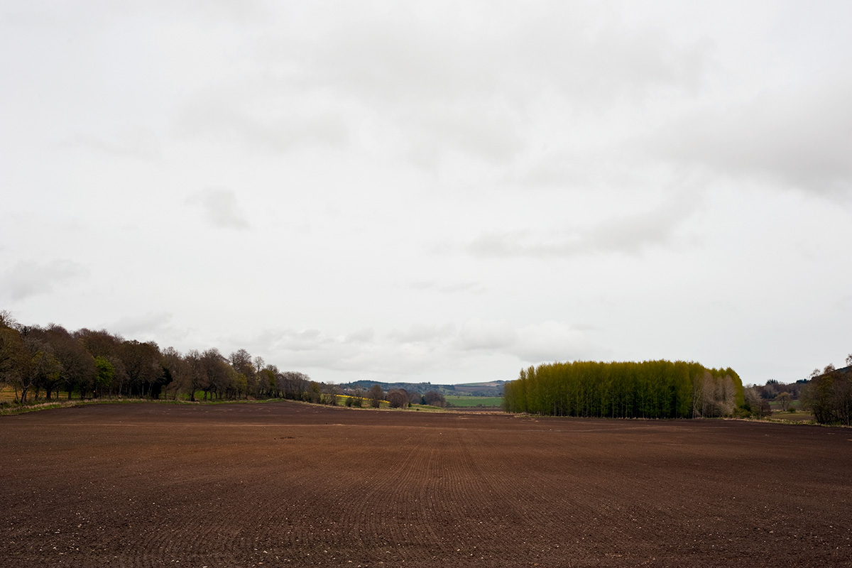 A recently planted barley field at Old Allangrange Farm, bordered by trees