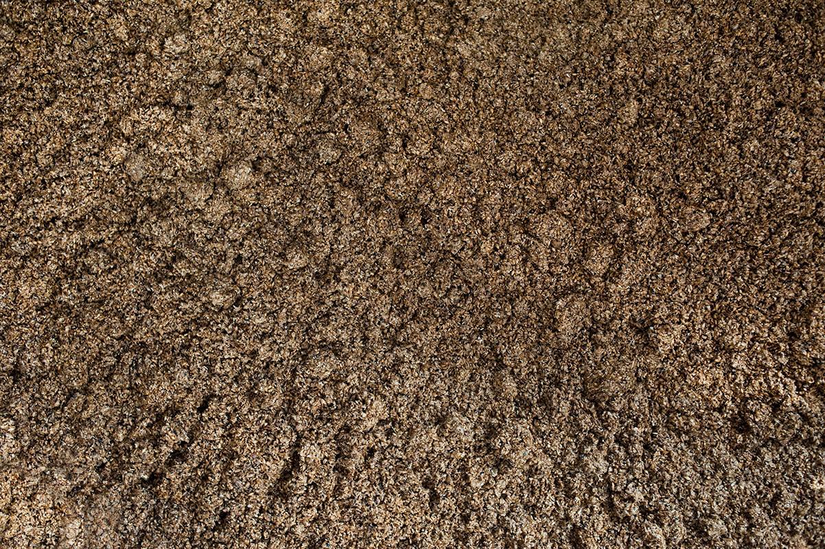 Spent malt inside the mash tun at Black Isle Brewery