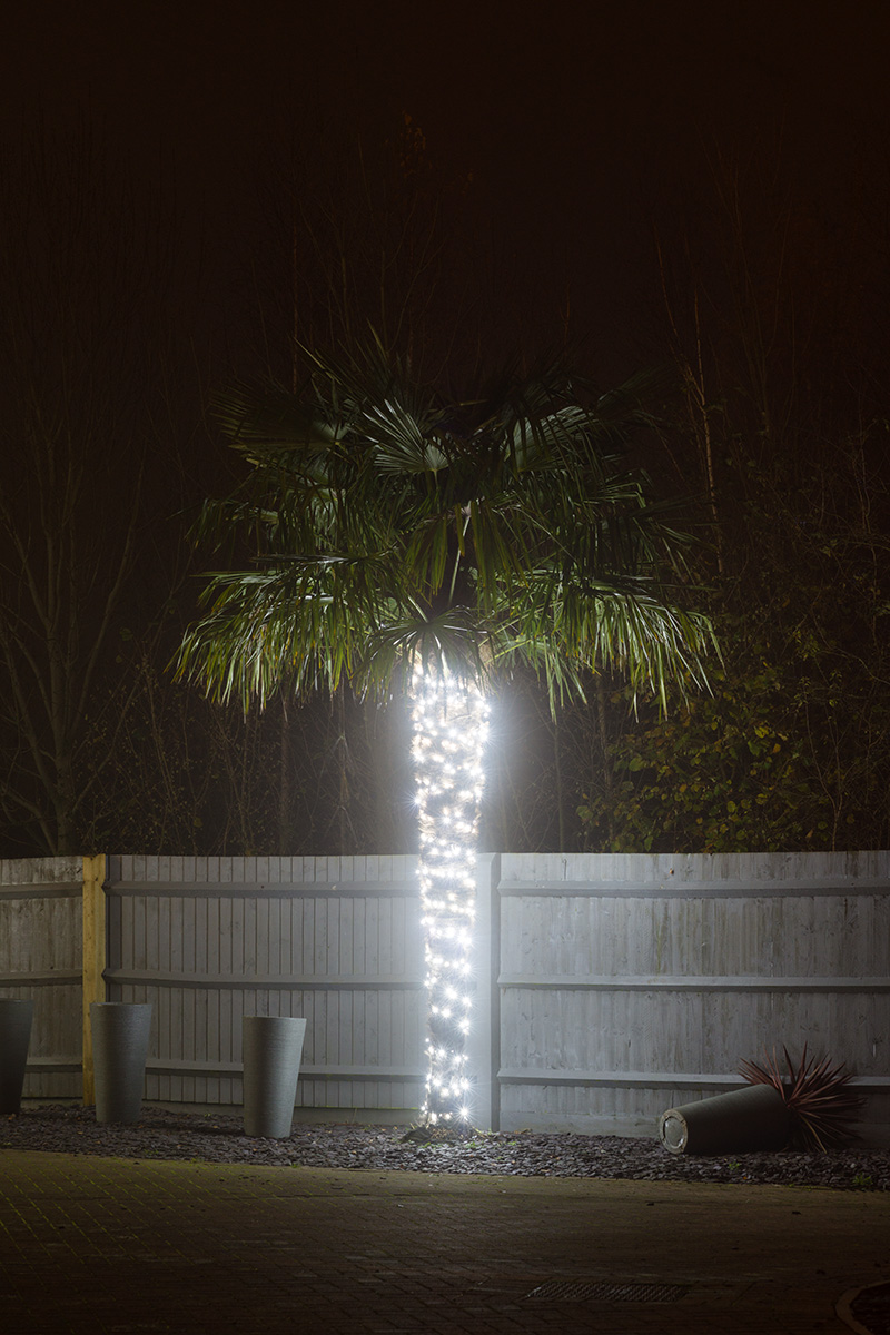A palm tree the trunk of which is wrapped with decorative electic lights, seen against a grey fence with trees beyond