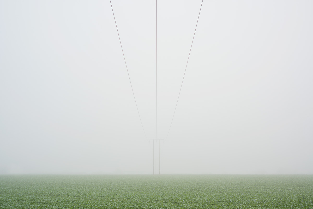 Fog over a field growing winter vegetables, with telephone lines receding into the fog