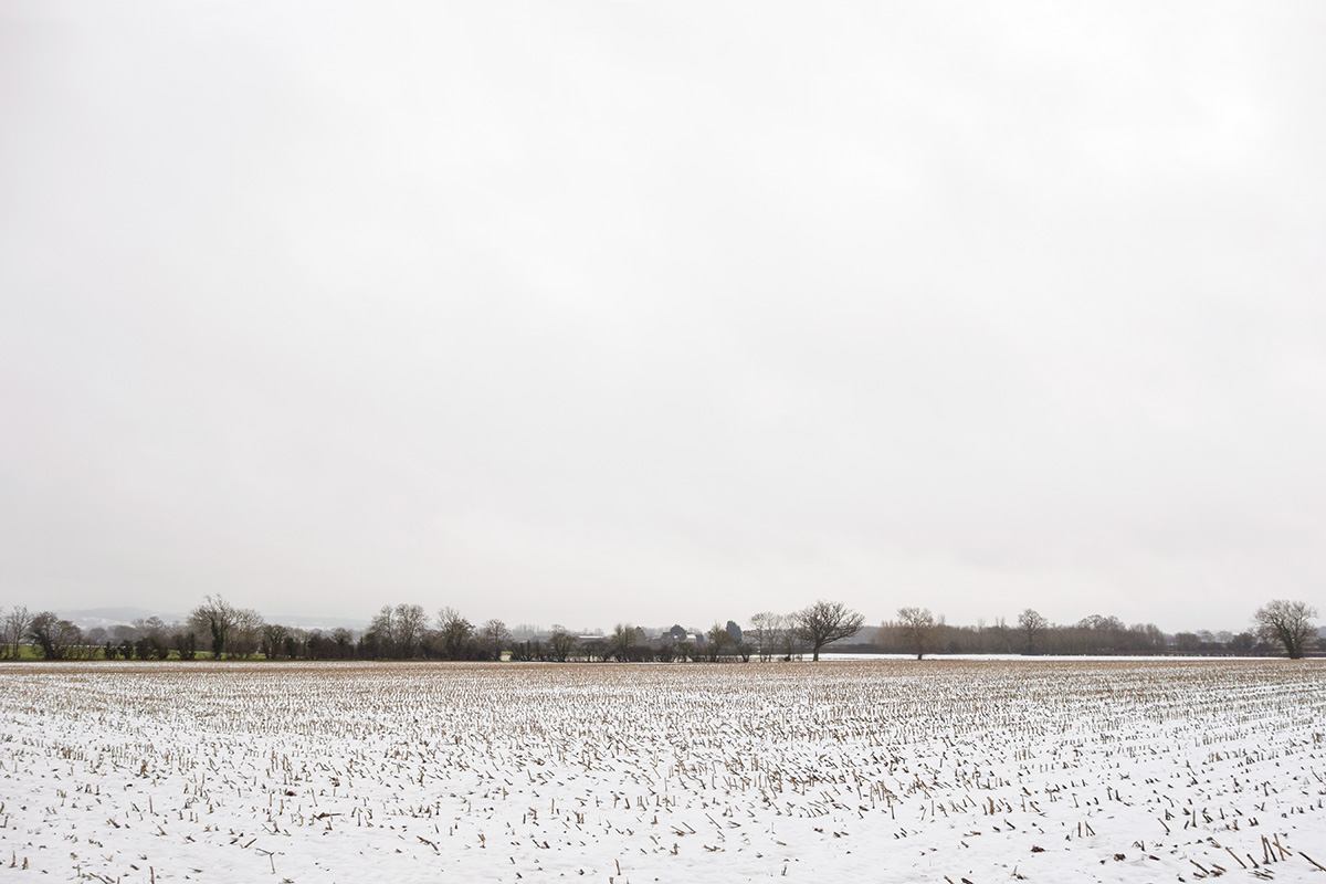Crop stubble poking through snow in a field in Moreton-in-Marsh, Gloucestershire