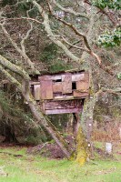 A treehouse, possibly a hunters' hide, in woodland on the Black Isle