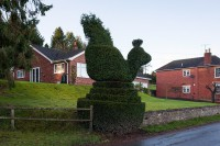 Chicken topiary