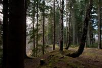 Colin Stronge on a woodland walk near Clootie Well, near Munlochy