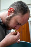 Brewer Colin Stronge smelling hops